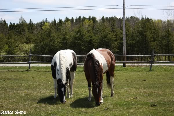 dure dure la vie de cheval IMG_5107