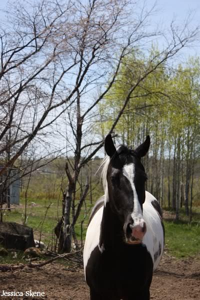 dure dure la vie de cheval IMG_5128