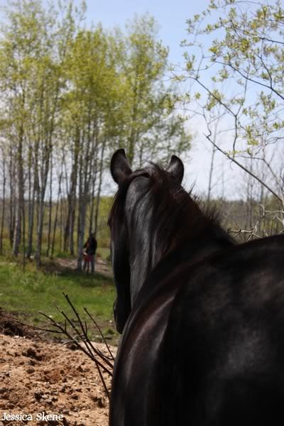 dure dure la vie de cheval IMG_5167