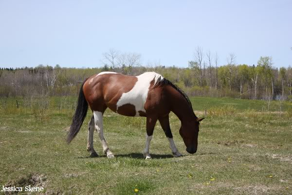 dure dure la vie de cheval IMG_5199