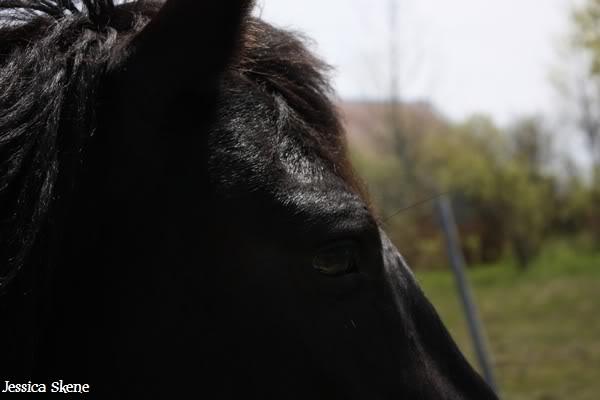dure dure la vie de cheval IMG_5203
