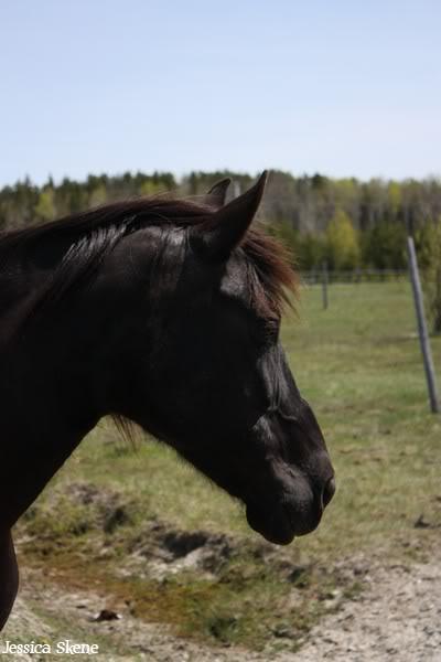 dure dure la vie de cheval IMG_5205