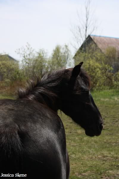 dure dure la vie de cheval IMG_5215