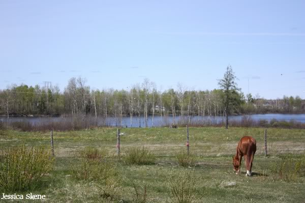 dure dure la vie de cheval IMG_5216
