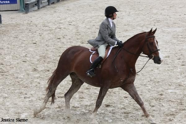 19 mars 2009, CSI 5* winter equestrian festival, west palm b IMG_3318