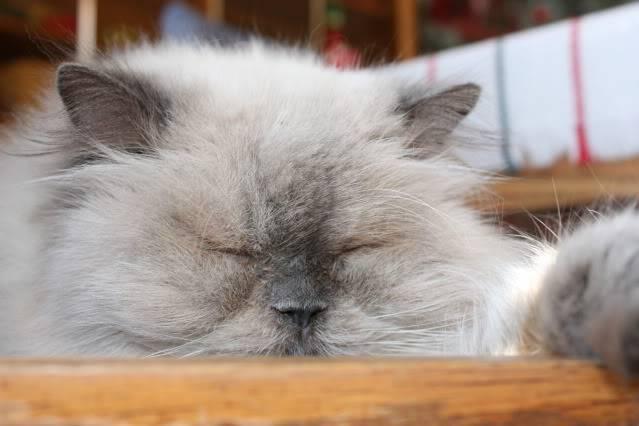 Pour les amoureux des chats IMG_0009