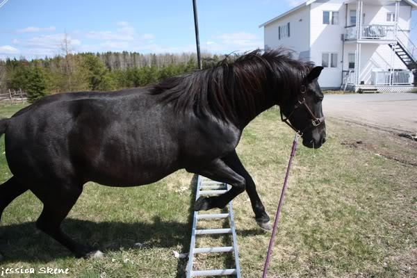 shooting de nara + chevaux en liberté IMG_4247