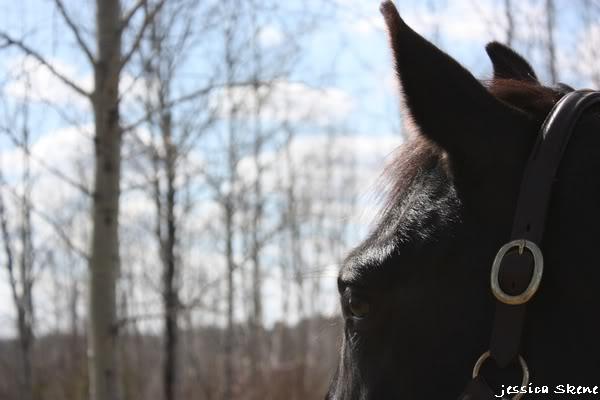 shooting de nara + chevaux en liberté IMG_4276