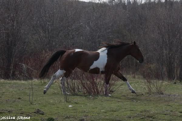 shooting de nara + chevaux en liberté IMG_4282