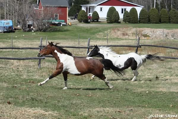 shooting de nara + chevaux en liberté IMG_4290