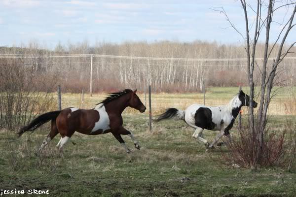 shooting de nara + chevaux en liberté IMG_4304
