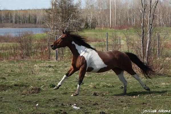 shooting de nara + chevaux en liberté IMG_4308