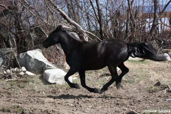 shooting de nara + chevaux en liberté IMG_4329