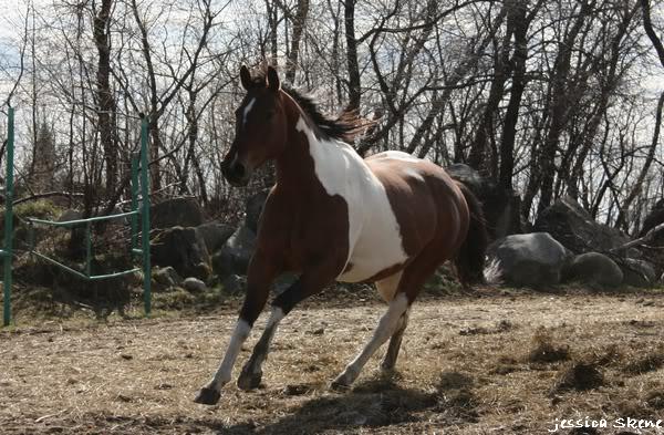 shooting de nara + chevaux en liberté IMG_4345