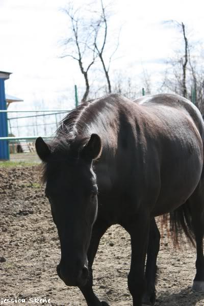 shooting de nara + chevaux en liberté IMG_4360