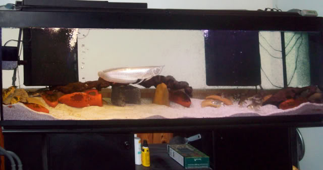 Aquarium 600 litres de tyrano34 100_0283