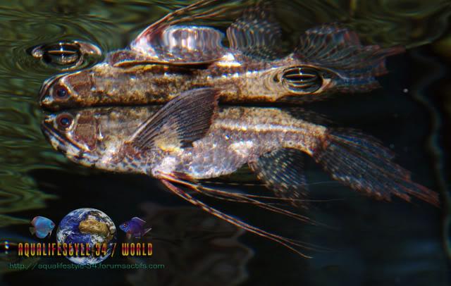 Apprendre à identifier un poisson ... (200 points) DSC_03262