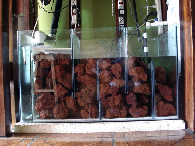 acuario critian vindas (cichlidés amérique centrale) DSC00807