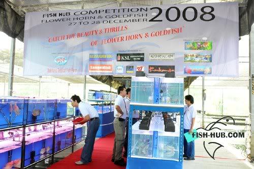 Fish-Hub Competition 2008 - Flower Horn & Goldfish Fishhub200848a