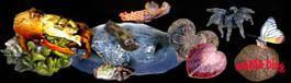 Découverte de l'aquariophilie Mantasexprience