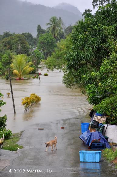 Inondation Sarawak  (Bornéo) Serian4-flood310109