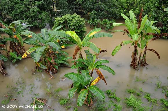 Inondation Sarawak  (Bornéo) Serian7-flood310109