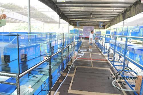 Fish-Hub Competition 2008 - Flower Horn & Goldfish Setup1