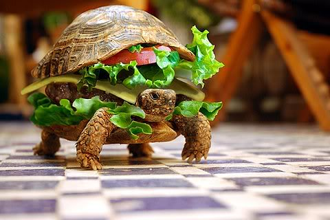 turtle burger!!  wanna try it F81280aa85fd953392cd19d1f26bd61b68b