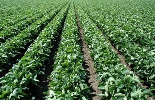 La importancia de la Tecnología de Alimentos en el desarrollo productivo de Argentina Agro-1