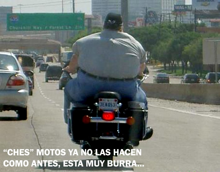 PARA QUE SONRIAS UN POCO... Funny-pictures-too-fat-for-motorcycles-fHi