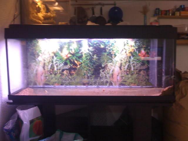 recherche d'information pour un projet Aquaterrarium dans un 240L IMG_0072