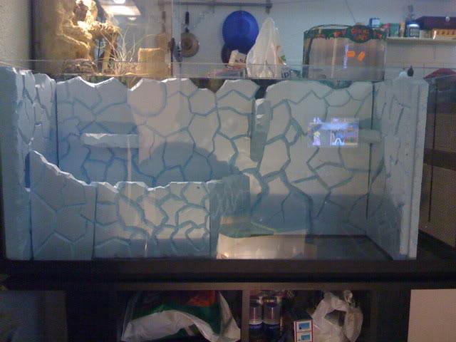 recherche d'information pour un projet Aquaterrarium dans un 240L IMG_0076