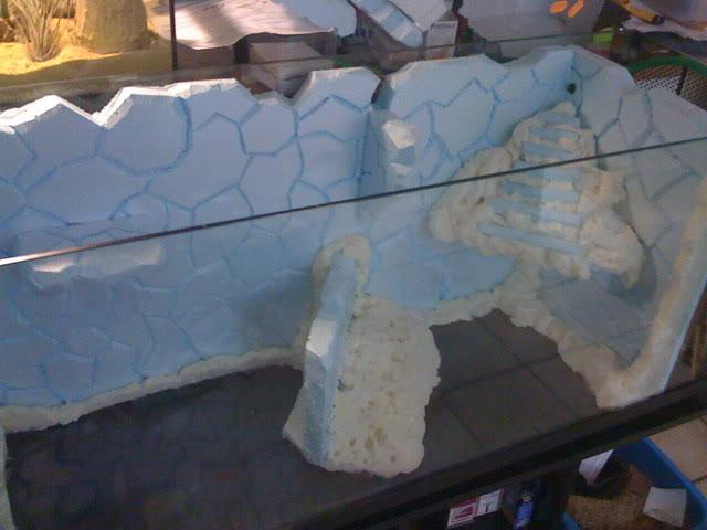 recherche d'information pour un projet Aquaterrarium dans un 240L IMG_0108