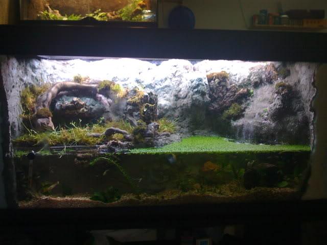 recherche d'information pour un projet Aquaterrarium dans un 240L IMG_0245