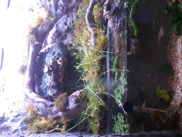 recherche d'information pour un projet Aquaterrarium dans un 240L IMG_0246