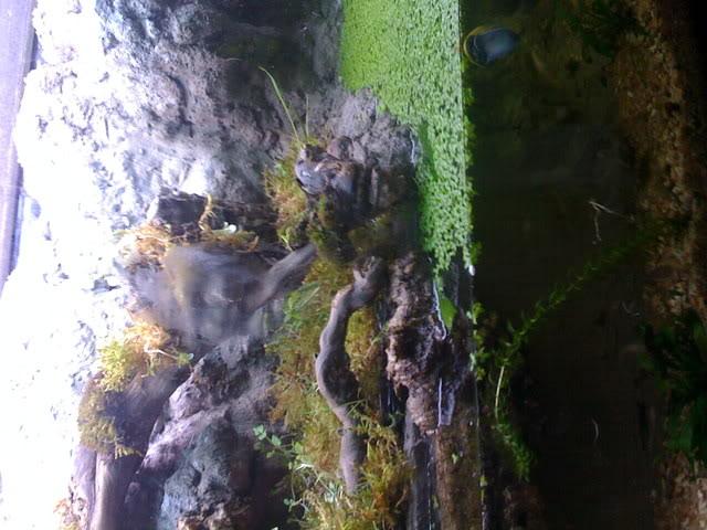 recherche d'information pour un projet Aquaterrarium dans un 240L IMG_0247