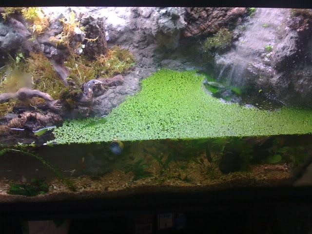recherche d'information pour un projet Aquaterrarium dans un 240L IMG_0249
