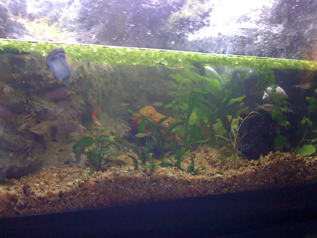 recherche d'information pour un projet Aquaterrarium dans un 240L IMG_0251