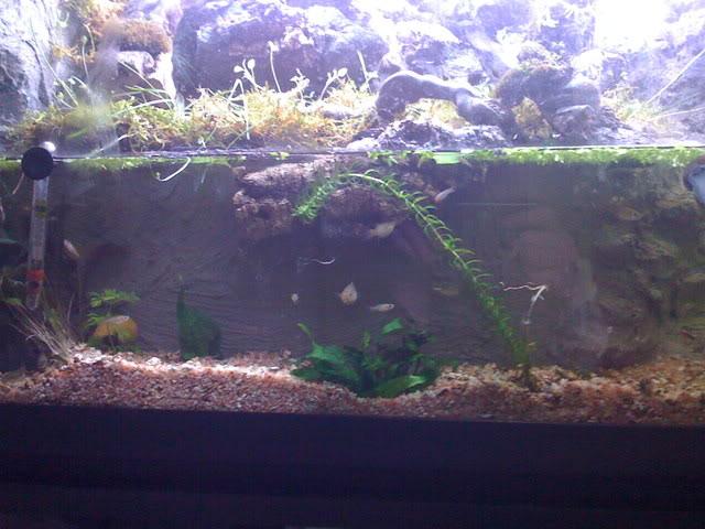 recherche d'information pour un projet Aquaterrarium dans un 240L IMG_0252