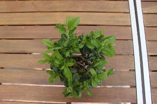 ¡Bienvenida, primavera! 2011-03-2102-1