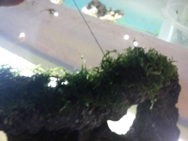 Decoración de rocas con musgo 6