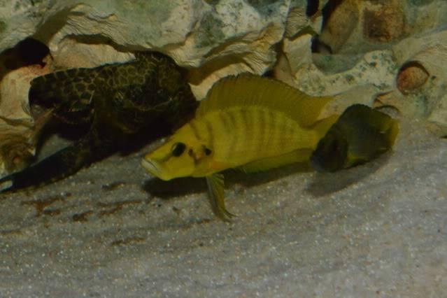 acuario 850l DSC_0027
