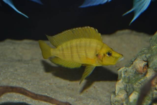 acuario 850l DSC_0055