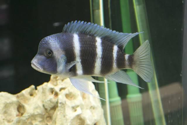 acuario 850l DSC_0007