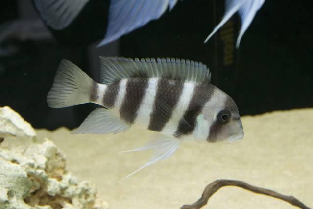 acuario 850l DSC_0008