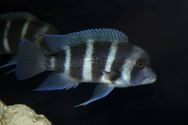 acuario 850l DSC_0189