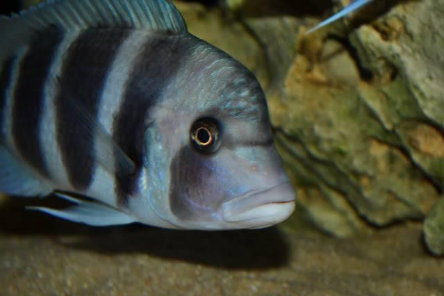 acuario 850l DSC_0195