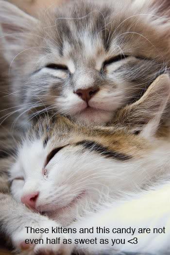 To Everyone at Hugz Cute_kittens