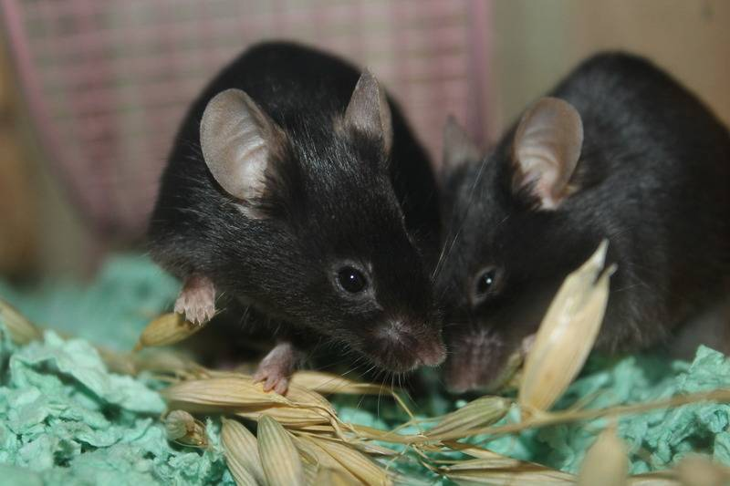 Here are my little black ladies IMG_6775_zps60gjdnxh