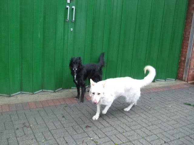 Tara 3 1/2- white long coat arriving at John's this coming weekend homed DSCF6590